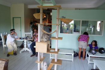 Cat Cafe Ubud4.jpg